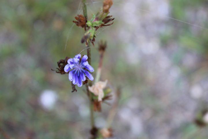 Purple Wild Flower - Angela Ennis
