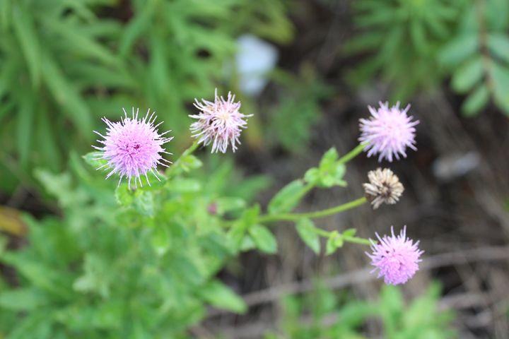 Wild Flowers - Angela Ennis