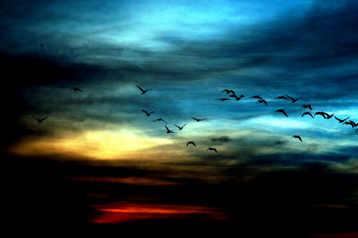 Fine Art High Flying Birds at Dusk - Amelia Painter