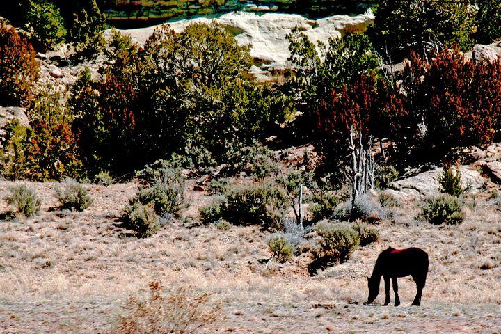 Horse Grazing in Desert - Amelia Painter