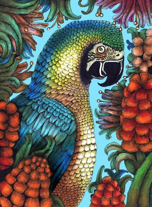 Parrot Drawing - Janelle Dimmett Illustration and Design