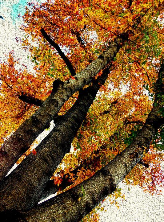 Reaching for Fall (MAK) - MAK