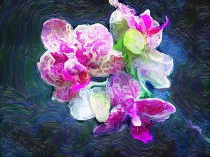 Trans Orchid (MAK)