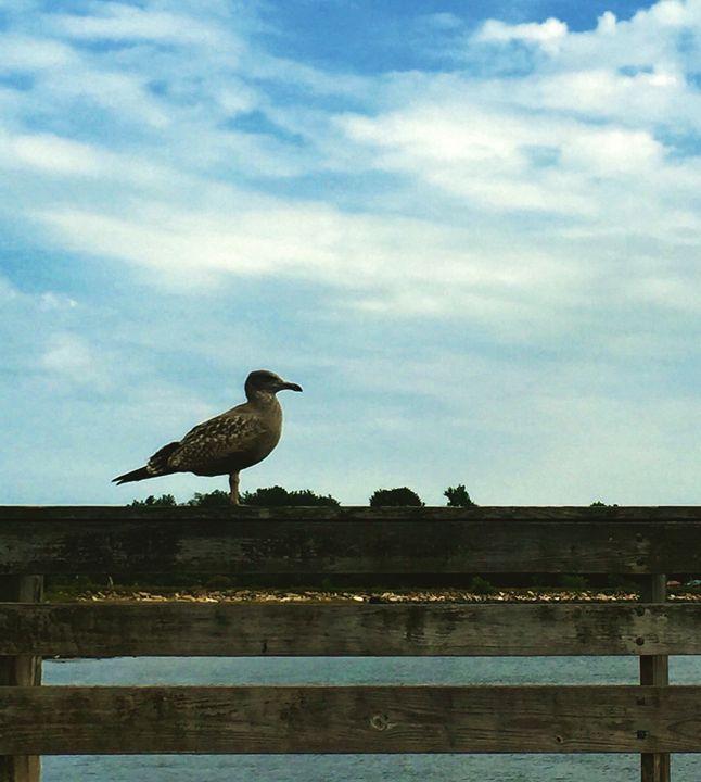 Portsmouth Gull - Dragon Blue