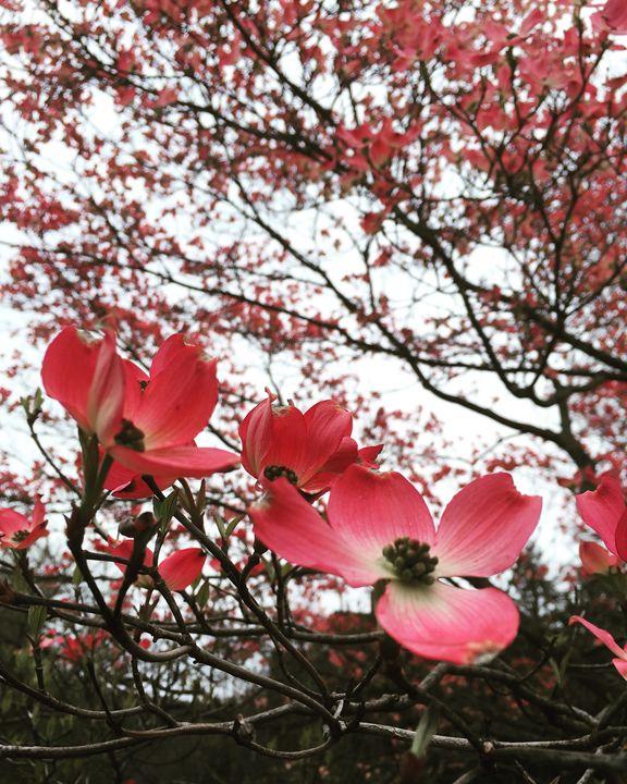Spring Petals - Dragon Blue