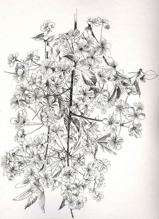 Flowers - AlexandraDvina