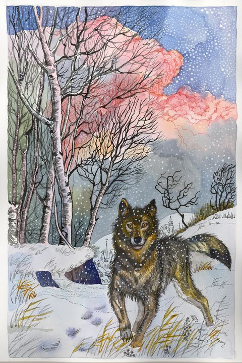 Wolf in the woods - AlexandraDvina