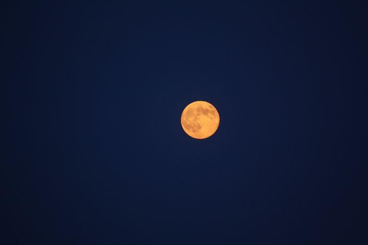 Moon - Elizabeth Manning