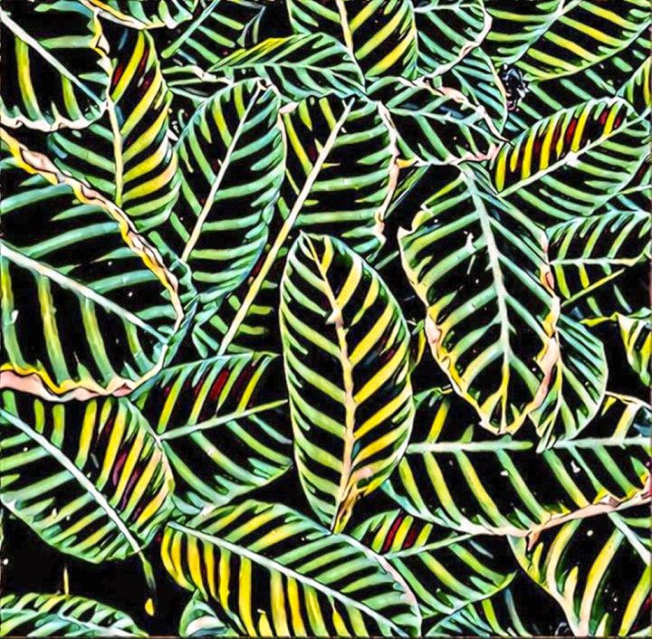 Rainforest - NaomYb'