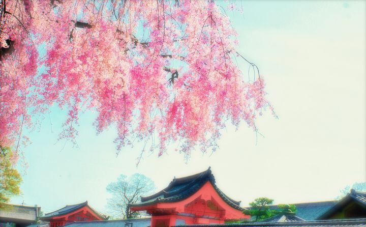 Blossoms - NaomYb'