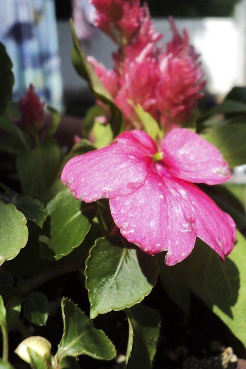 Flowers - AmandaSmentCreations