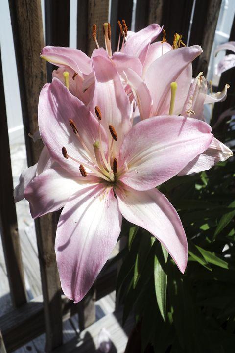 Flower - AmandaSmentCreations