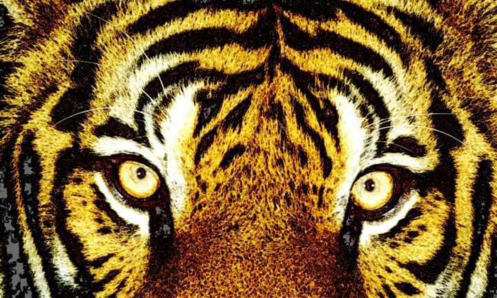 Tiger Eyes - Blackwater Studio