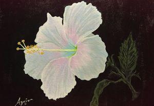 White Hibiscus - Agojo art