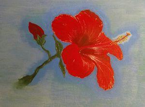 Red Hibiscus - Agojo art
