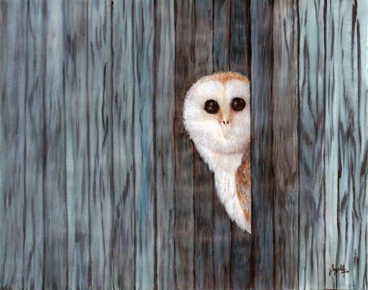 Barn Owl - j.lazell