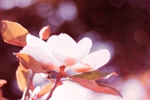 Magnolia 17-005 Warm - j.lazell