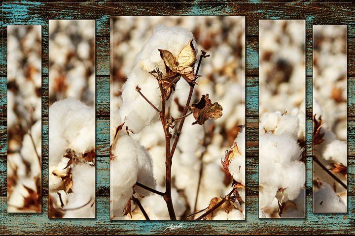 Bloomin' Cotton - j.lazell