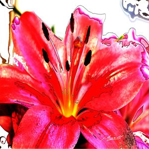 Tiger Lily in Red - j.lazell