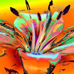 Lily Pop Orange - j.lazell