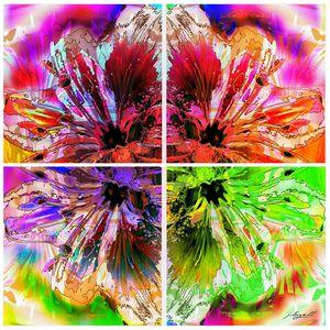 Lily Explosion - j.lazell