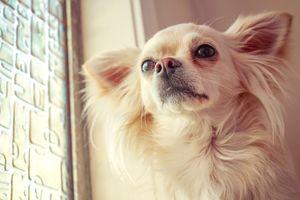 Little friend, by the window.