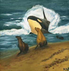 Orca Peekaboo