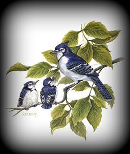 blue jay and babies - wildlife in watercolor