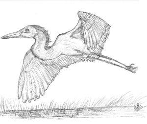 Egret Hunting - LoveSketches