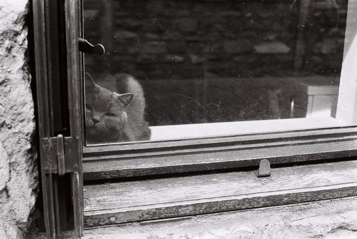 cat at the window - Johan Chapsak