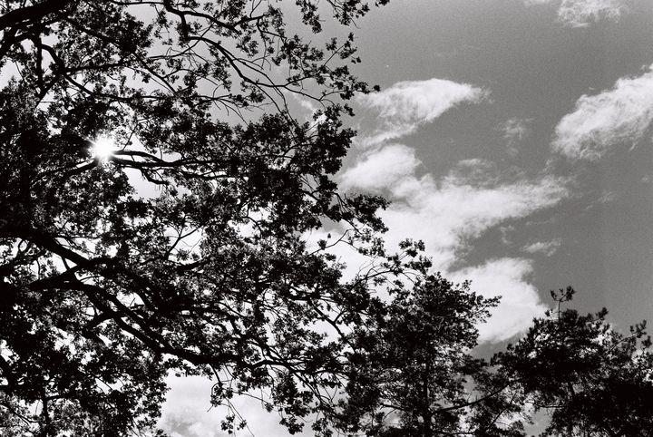 cloud and tree - Johan Chapsak