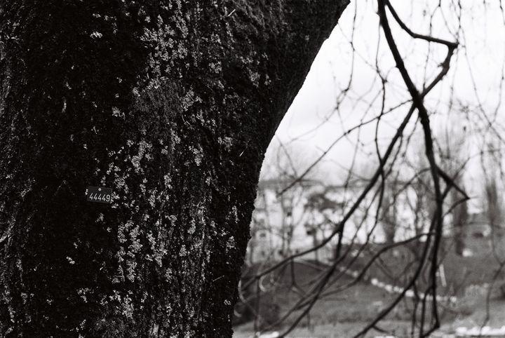 tree 44449 - Johan Chapsak