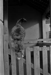 jumping cat - Johan Chapsak