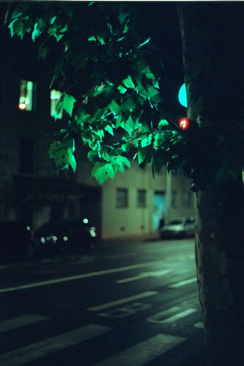 light green leaf - Johan Chapsak