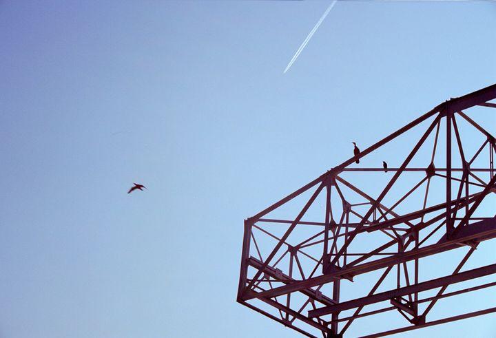 birds and airplane - Johan Chapsak