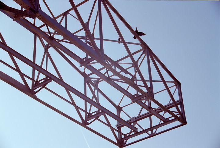 birds on a crane - Johan Chapsak