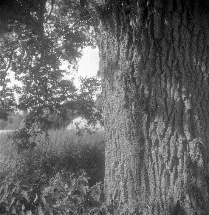 Oak - Johan Chapsak