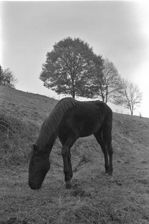 Black horse - Johan Chapsak