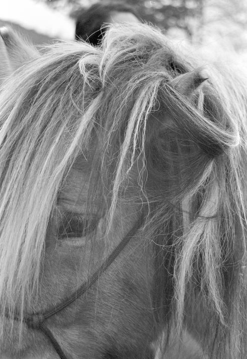 horse mane - Johan Chapsak