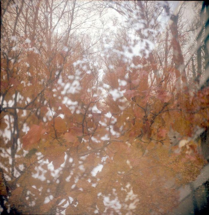 autumn blossoms - Johan Chapsak