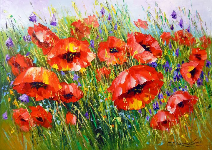 Poppies in bloom - Olha Darchuk