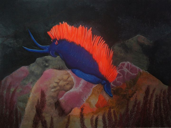 Nudibranch - Zio Marco