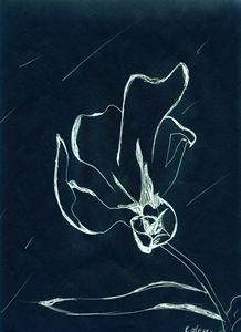 Blooming Flower - Kierra Morgan's Gallery