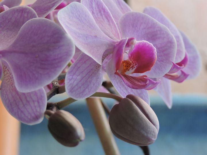 Nature's Beauty - Carlos Pellecer
