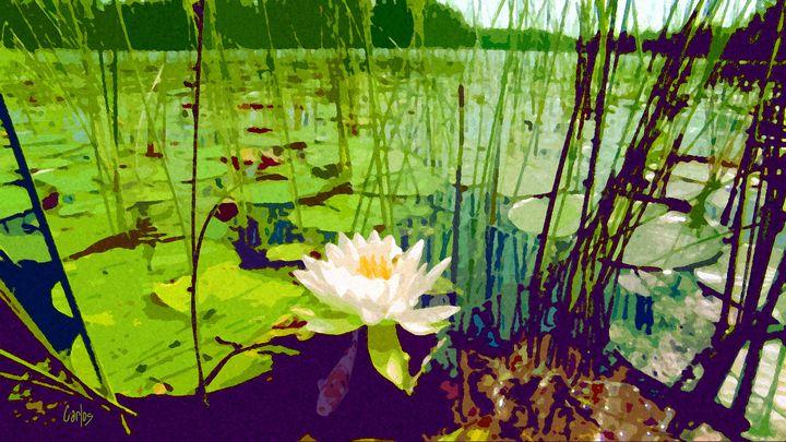 Lone Lily - Valley Dreams