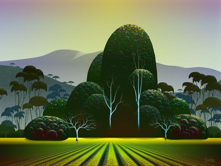 Napa Vineyard - Valley Dreams