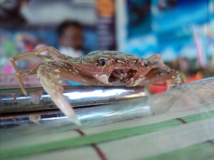 the crusty crab... - Nikhil Shinde