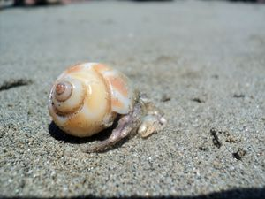 life in a shell..