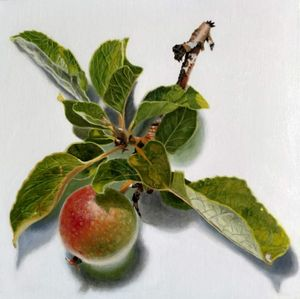 Apple from the tree