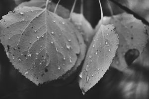Raindrops in black and white